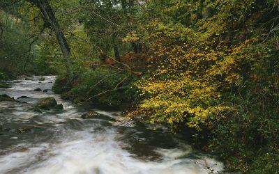 A Walk to Thomason Foss Waterfalls