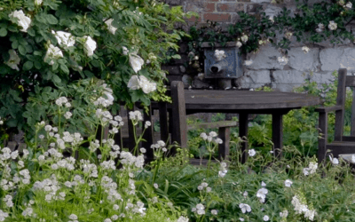 Jackson's Wold Garden