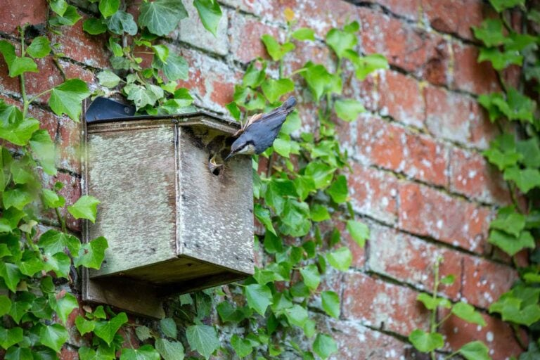 nuthatch, cliff house, nature, magnfication post, mag post, holidays, nature, stayatcliff, yorkshire, self catering, holiday accommodation, welcome to yorkshire,