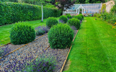 Lavender at Cliff House Holiday Cottages
